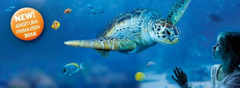 SEA LIFE Roma Aquarium, si avvicinano le prime selezioni